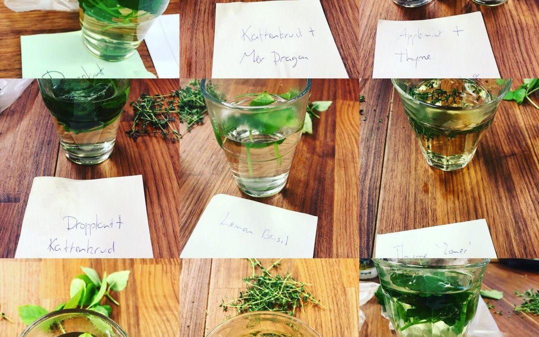 Taste sessie verse kruiden voor infusies met VaVersa